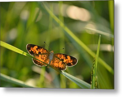 Metal Print featuring the photograph A Pearl In The Grass by JD Grimes