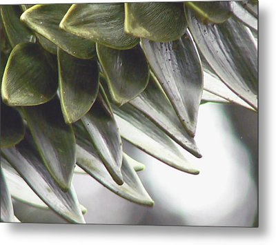 A Piece Of The Puzzle  Metal Print by Pamela Patch