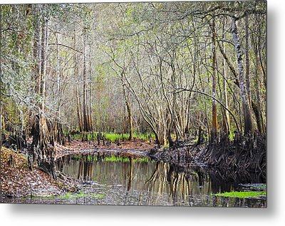 A Quiet Back Woods Place Metal Print by Carolyn Marshall