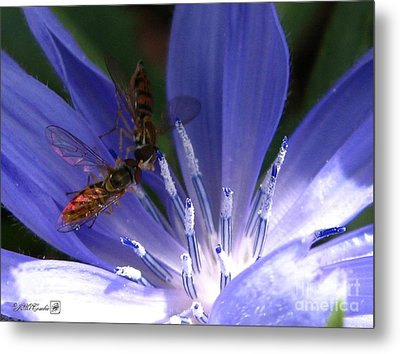 A Quiet Moment On The Chicory Metal Print