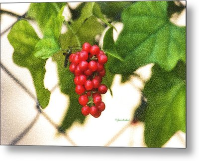 Metal Print featuring the photograph A Red Cluster by Joan Bertucci
