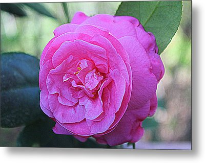 Metal Print featuring the photograph A Rose By Anyother Color by Bob Whitt