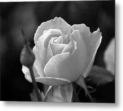 A Rose In Black And White Metal Print by Janice Adomeit