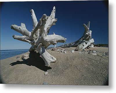 A Shot Of Some Driftwood On A Beach Metal Print by Raymond Gehman