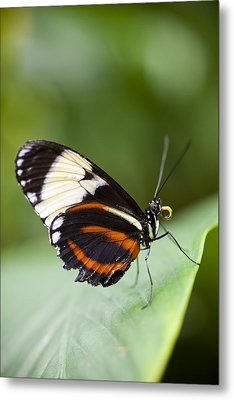 A Side View Of A Butterfly Metal Print