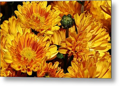 A Sign Of Fall Metal Print by Bruce Bley