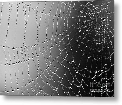 A Spider Designs The Universe Metal Print by Ronnie Glover