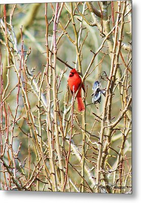 A Spot Of Red Metal Print by Lorraine Louwerse