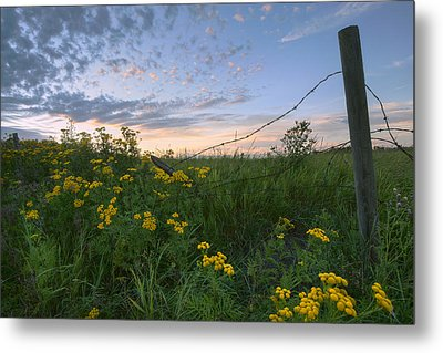 A Summer Evening Sky With Yellow Tansy Metal Print by Dan Jurak