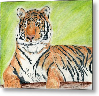 A Tiger's Rest Metal Print by Mark Schutter