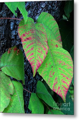 A Touch Of Autumn Metal Print by Darleen Stry