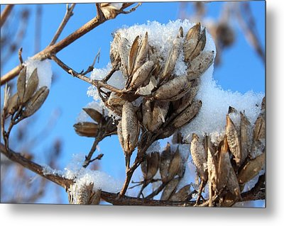 A Touch Of Winter Metal Print