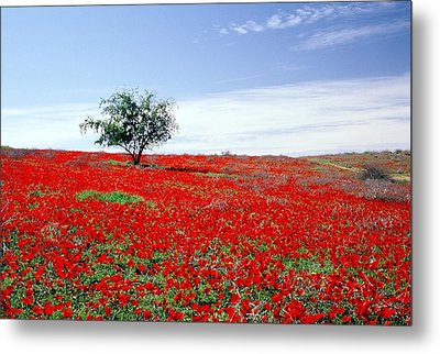 A Tree In A Red Sea Metal Print by Dubi Roman