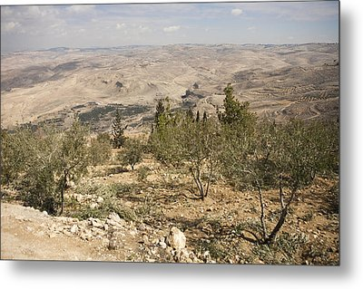 A View Of Olive Trees And Moses Metal Print by Taylor S. Kennedy