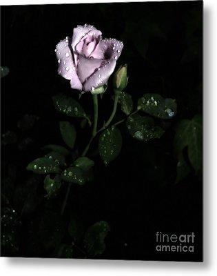 A Vintage Rose Metal Print by Eva Thomas