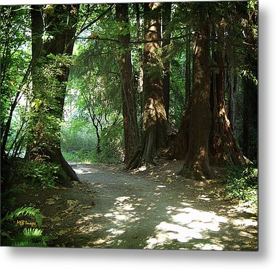 A Walk In The Forest Metal Print by Margaret Buchanan