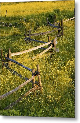 A Wooden Rail Fence Surrounded By Metal Print by David Chapman