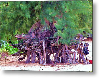 Metal Print featuring the photograph Above Ground Roots On Tamarisk Tree  by Michele Penner