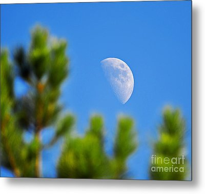 Above The Pines Metal Print by Al Powell Photography USA