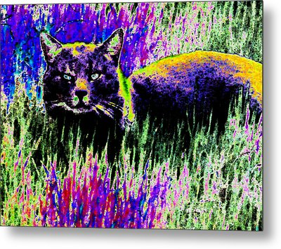 Abstract Of Tabby Metal Print