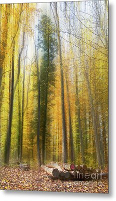 Abstract Wood Metal Print