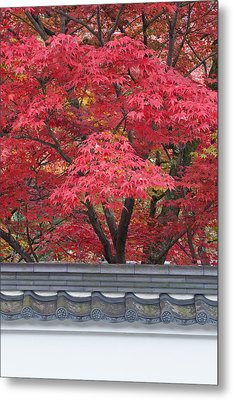 Acer Trees Acer Palmatum. Autumn Color Metal Print by Rob Tilley