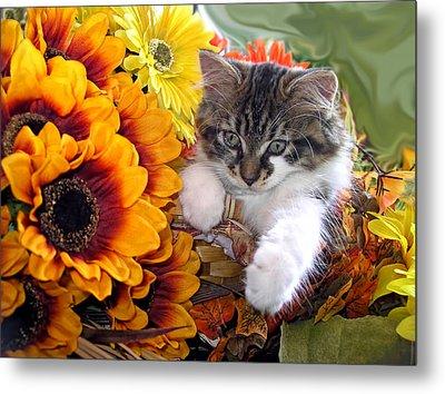 Adorable Baby Animal - Cute Furry Kitten In Yellow Flower Basket Looking Down - Kitty Cat Portrait Metal Print by Chantal PhotoPix