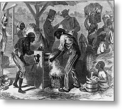 African American Slaves Using A Cotton Metal Print by Everett
