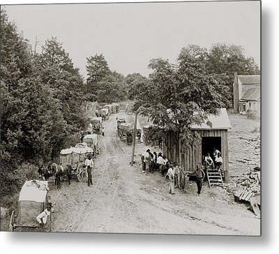 African Americans And Mule Drawn Wagons Metal Print by Everett