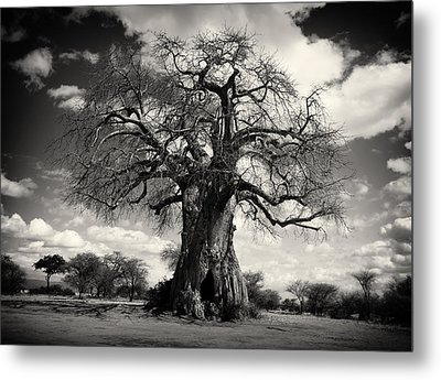 African Baobabs Tree Metal Print by Jess Easter