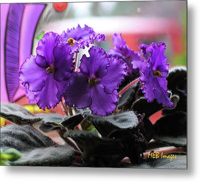 African Violets Metal Print by Margaret Buchanan