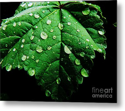 After The Rain Metal Print by Lin Haring