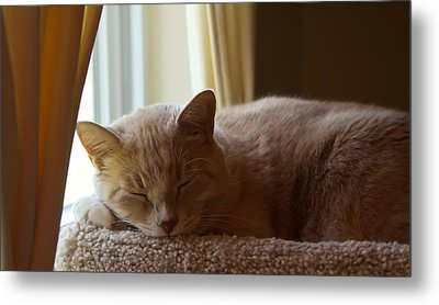 Afternoon Kip Metal Print