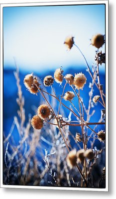 Against The  Blue Sky Metal Print by Lisa  Spencer