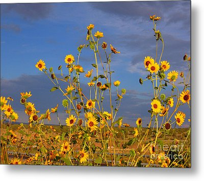 Against The Blue Sky Metal Print by Tamera James