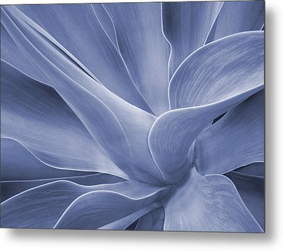 Agave In Blue Metal Print