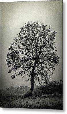 Metal Print featuring the photograph Age Old Tree by Steve McKinzie