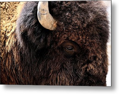 Metal Print featuring the photograph Ageless Bison Of Yellowstone by Yeates Photography