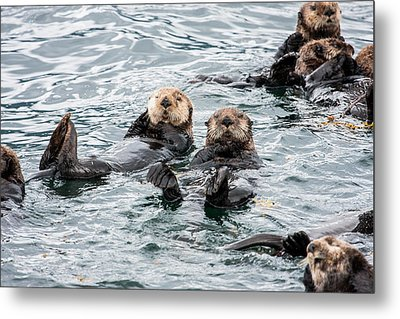 Alaskan Sea Otters Metal Print by Josh Whalen