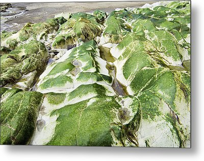 Algae Covered Rocks Metal Print by Georgette Douwma