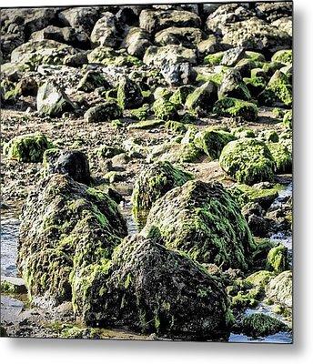 Algae Rocks Metal Print by Arya Swadharma