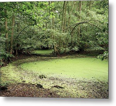 Algal Bloom In Pond Metal Print by Michael Marten