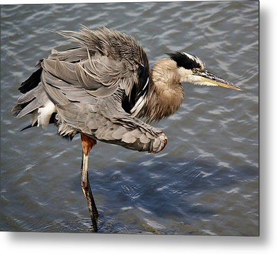 All Fluffed Up Metal Print by Paulette Thomas