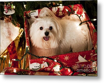 All Wrapped Up Metal Print by Leslie Leda