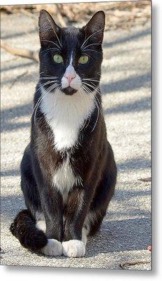 Alley Cat Metal Print by Lisa Phillips
