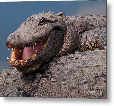 Alligator Smile Metal Print by Art Whitton