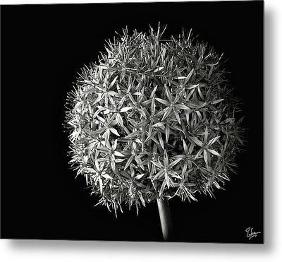 Metal Print featuring the photograph Allium In Black And White by Endre Balogh