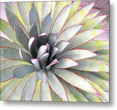 Aloe Metal Print by Rebecca Margraf