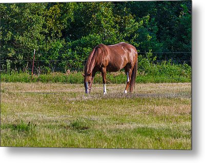 Alone In The Pasture Metal Print by Doug Long