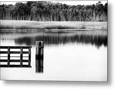 Alone In The Pine Barrens Metal Print by John Rizzuto